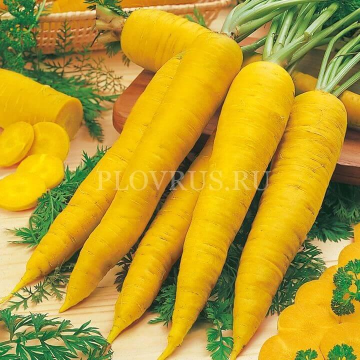 Узбекская желтая морковь